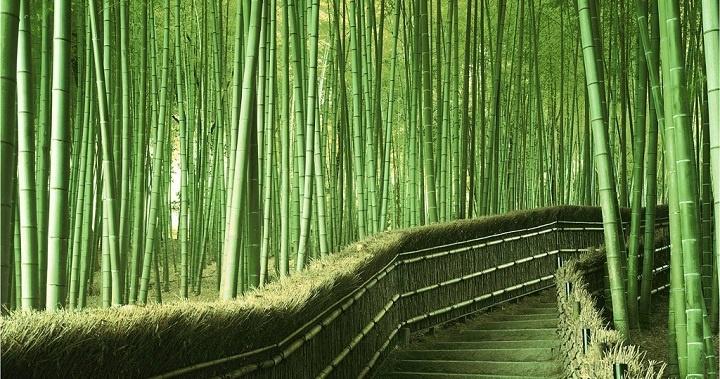 El bambú, un tejido que nos gusta.
